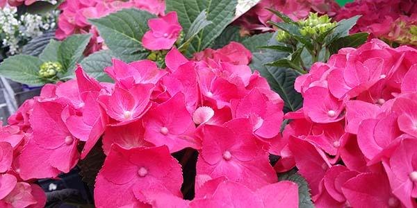 ingrids_creativ-Blume_Pflanzensortiment